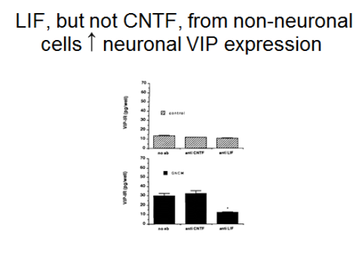 two bar graphs, one above the other, illegible, with title LIF, but not CNTF, from non-neuronal cells (up arrow) neuronal VIP expression. VIP levels in dissociated SCG neurons with and without addition of ganglion non-neuronal cell conditioned medium (GNCM).