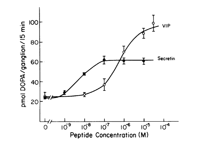 graph with x-axis peptide concentration (M) from 0 to 10 to the power of -9,-8,-7,-6,-5,-4. y-axis pmol DOPA/ganglion/15min from 20,40,60,80,100 with 2 lines, one Secretin, other VIP. Concentration-response curve for the stimulation of TH activity by secretin and VIP. Ganglia were preincubated with peptide for 60 min prior to addition of a dopa decarboxylase inhibition. Dopa accumulation was measured during the subsequent 15 min.